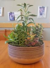 Succulent Garden(8in) Plant