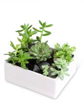 Succulent Garden Plant