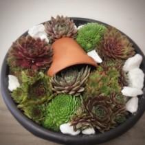 Succulent Garden Planter