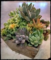 Succulent garden Plants
