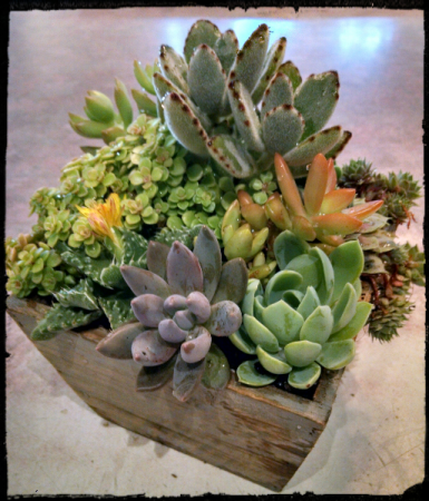 Succulent Garden Plants In Pawling Ny Parrino S Florist