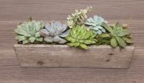 Succulent Garden - Rectangle Wood
