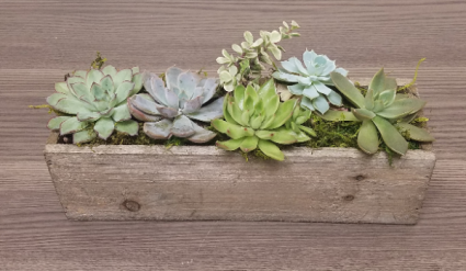 Succulent Garden - Rectangle Wood