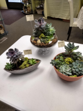 SUCCULENT GARDEN SPECIALS styles may vary