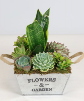 Succulent  Garden Tin