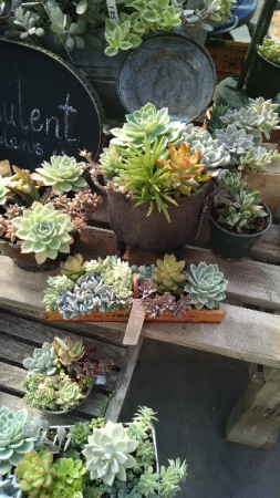 Succulent Gardens Plant in Pawling, NY | PARRINO'S FLORIST