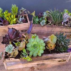Succulent Gardens Plant Arrangement in Lexington, NC | RAE'S NORTH POINT FLORIST INC.