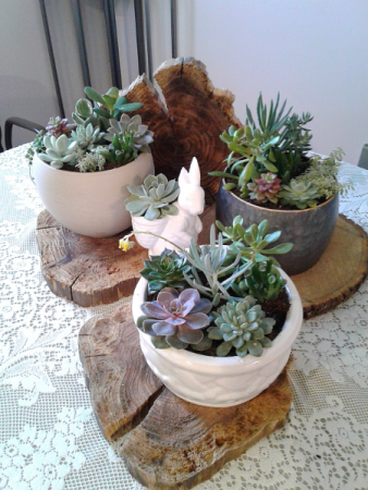 Succulent Gardens Plants In Northfield Mn Judy S Floral Design