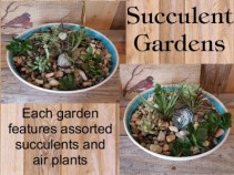 Succulent Gardens Tabletop Garden In Paris Ky Chasing Lilies Floral