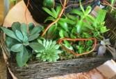 Succulent Handle Basket Dish Garden Dish Garden