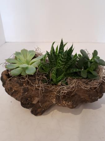 Succulent Log  planter