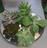 Succulent Oasis modern
