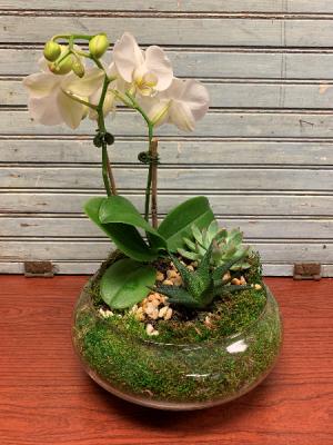 Succulent Orchid Dish Garden Dish Garden in Severna Park, MD | SEVERNA PARK FLORIST INC  SEVERNA FLOWERS & GIFTS