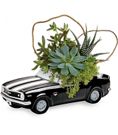 Succulent Plant Garden  Happy Father's Day