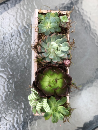 Succulent Planter box Succulents