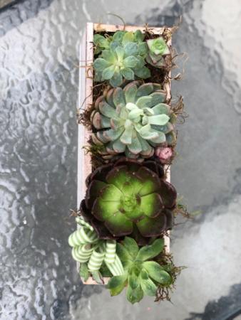Succulent Planter box Succulents