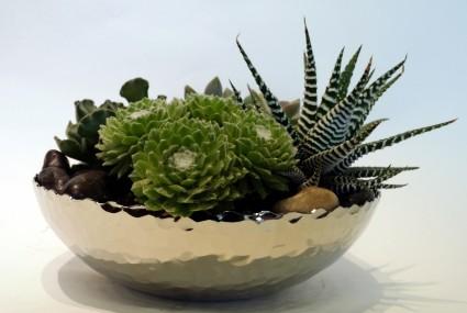Succulent Planter Dish Garden