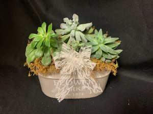Succulent Planter Garden in Red Lake, ON | FOREVER GREEN GIFT BOUTIQUE