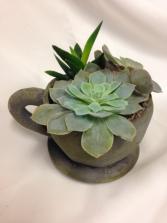 Succulent Planter in Concrete Mug Plant