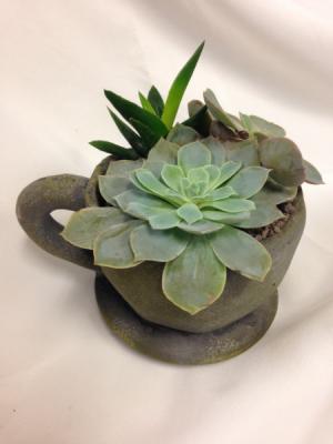 Succulent Planter in Concrete Mug Plant in Detroit Lakes, MN | DETROIT LAKES FLORAL