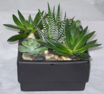 SUCCULENT PLANTER Indoor Plant