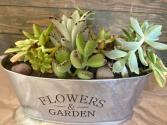 Succulent PLanter Live plants