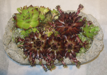 SUCCULENT PLANTER Outdoor/Indoor Plant