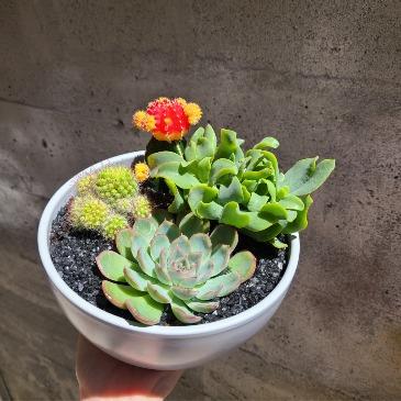 Succulent Planter Planter