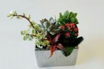 Succulent Planter Silver square planter
