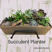 Succulent Planter Plants