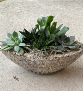 Succulent Planter Please call to order- in town delivery only