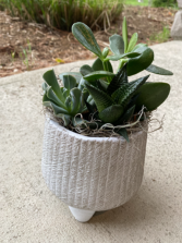 Succulent Planter -SOLD OUT Please call to order - In town delivery only
