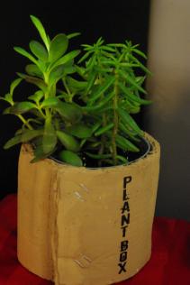 Succulent Planter Succulents