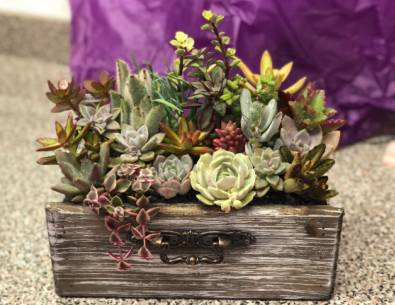Succulent Planter Wood Drawer  Plant