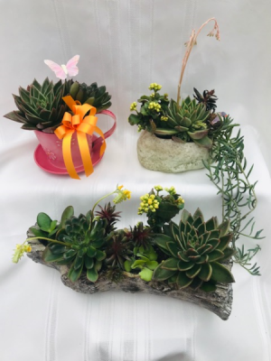 Succulent Planters Houseplant in Coleman, WI | COLEMAN FLORAL & GREENHOUSES