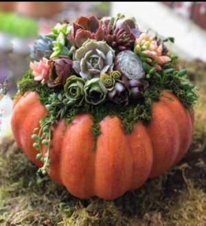 Succulent Pumpkin  in Forney, TX | Kim's Creations Flowers, Gifts and More