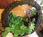 Succulent Round Basket Dish Garden Dish Garden