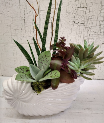 Succulent Sea Shell Arrangement