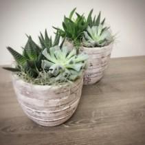 Succulent Set  Planter