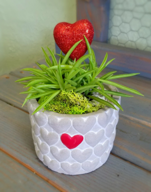 Succulent Single Love Valentine's Day in Clinton, OK | Prairie Sunshine Flowers & Balloons