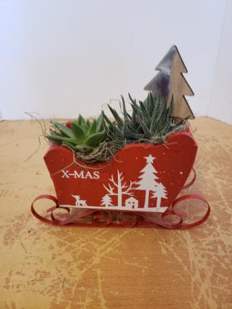 Succulent Sliegh Christmas