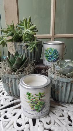 Succulent Plant & Spa Candle