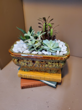 Succulent splendor  Local delivery . Container colors will vary