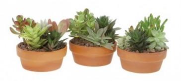 Succulent Succulent Garden Planter