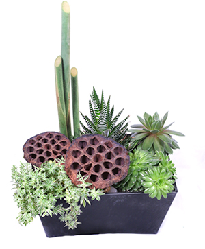 Succulent Surprise Succulent Planter in Cincinnati, OH | Reading Floral Boutique