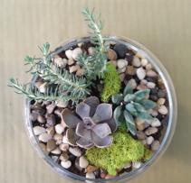 Succulent Terrarium boss's day