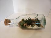 Succulent terrarium  Plants