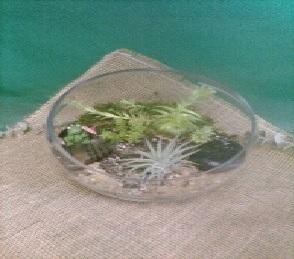 Succulent Terrarium Terrarium in Newport News, VA | Pick Me Up Love LLC.