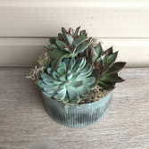 Succulent Tin  Planter