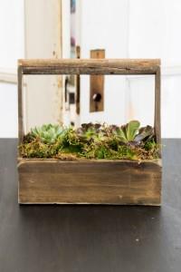 Succulent Tool Box